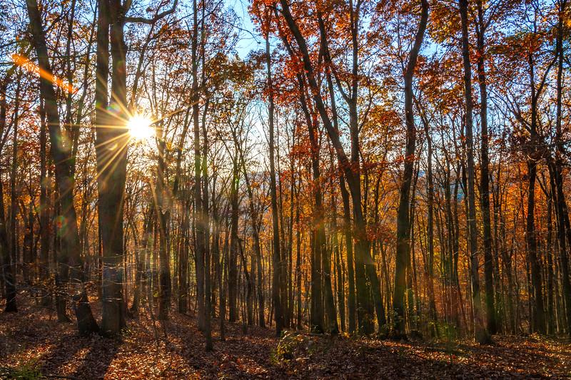 West Virginia Fall Colors Three.jpg