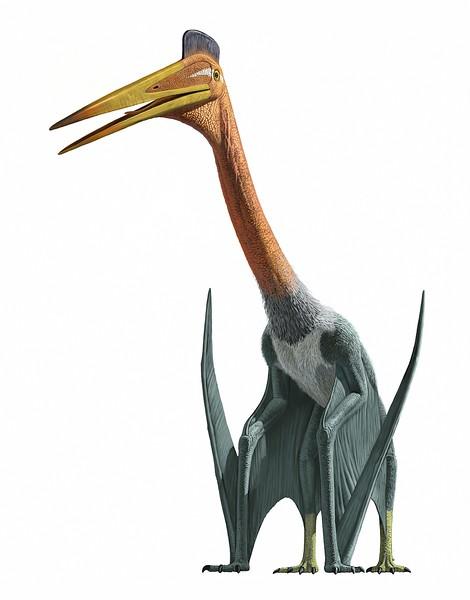 QuetzalcoatlusReal.jpg