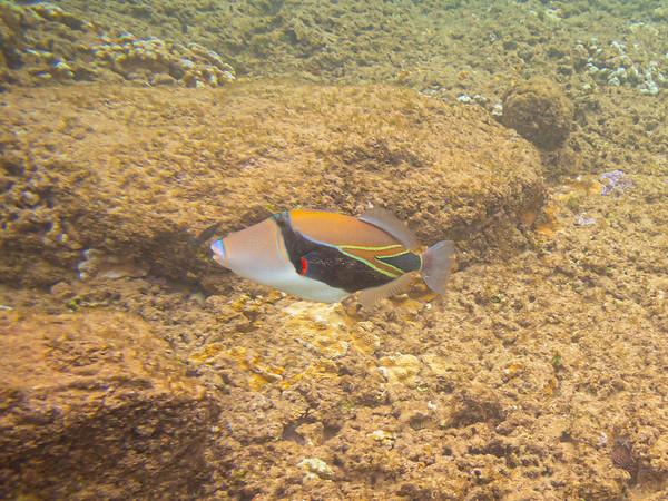 Kapalua Bay Snorkeling