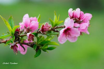 My flowers  הפרחים שלי