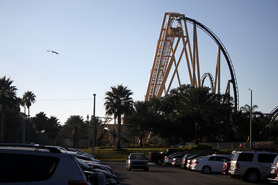 Holidays and Chetah: 12-11-2010