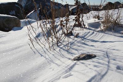 Gooseberry Island Beach: Winter Wonderland