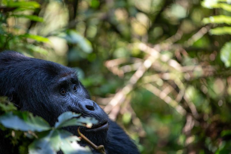 Uganda_T_Gor-323.jpg