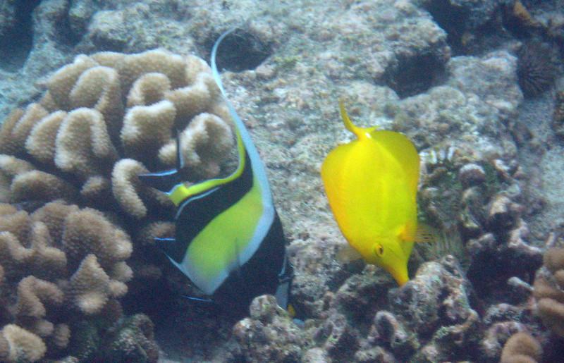 526- 20080416- Hawaii 20-Snorkelling IMG_0790.jpg