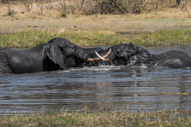 Botswana_June_2017 (2924 of 6179).jpg