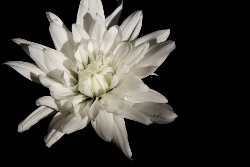 white flower option 1.jpg