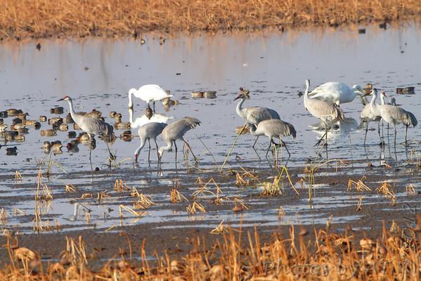 2012-11-20 Squaw Creek National Wildlife Refuge