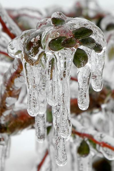 IceStorm-146.jpg