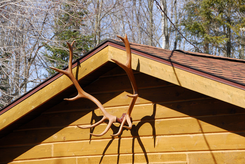 Deer horn on a house's roof in Antigo, Wisconsin