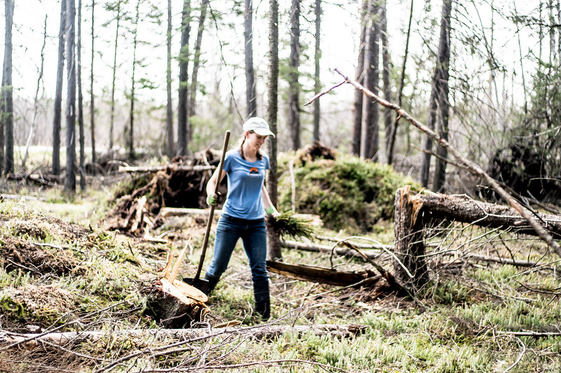 tree planting FOSZB Warren Nelson Bog Blue Spruce Road Sax-Zim Bog MN DSC07418.jpg