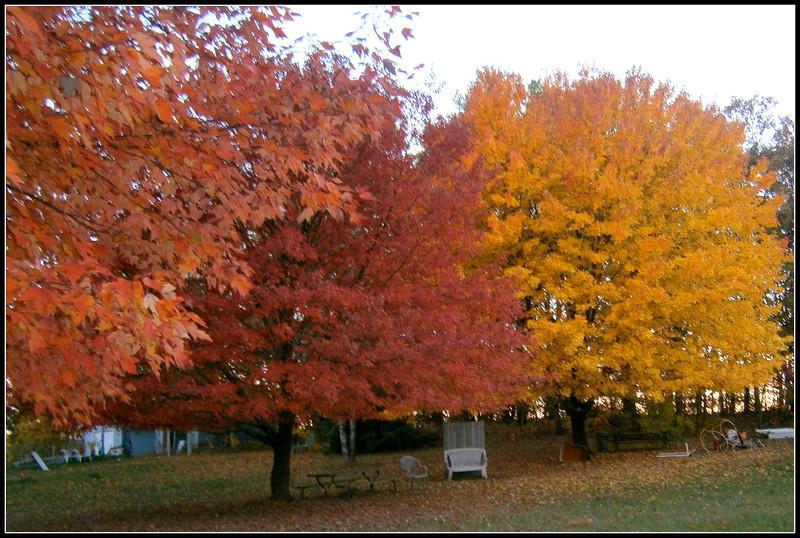 fall (6).jpg
