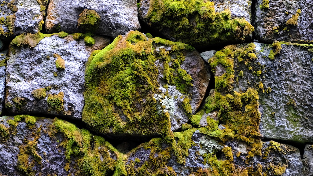 A section of moss-covered wall.