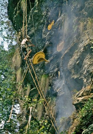 Honey Hunters of Nepal