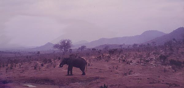 Elefant-ved-vannhull.jpg