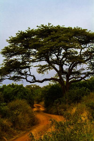 Path in Tsavo.jpg