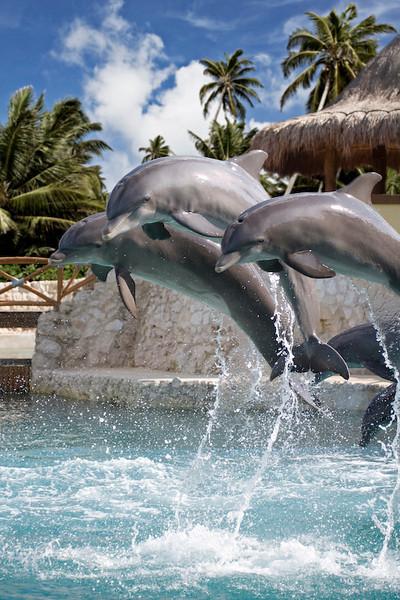 Dolphinaris Cozumel 10.jpg