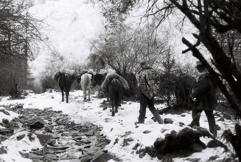 guides_horses_snow.jpg