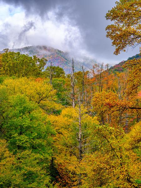 20201011_smoky_mountains-2948.jpg