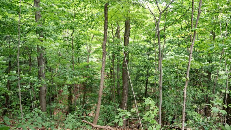 Ontario-Oakville-Sixteen-Mile-Creek-Trail02.jpg