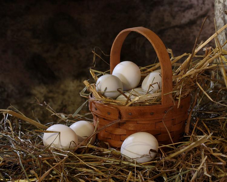eggbasket-terim_5_20141019_1783527832.jpg
