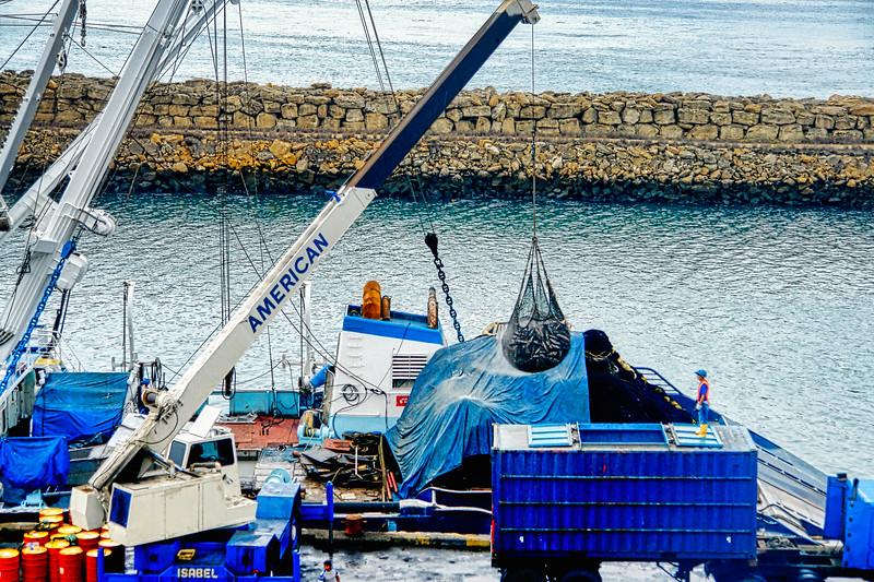 Unloading the tuna boats