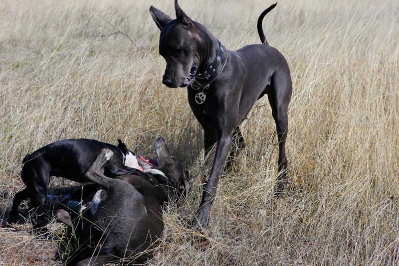 dogs_vasquez_064.jpg