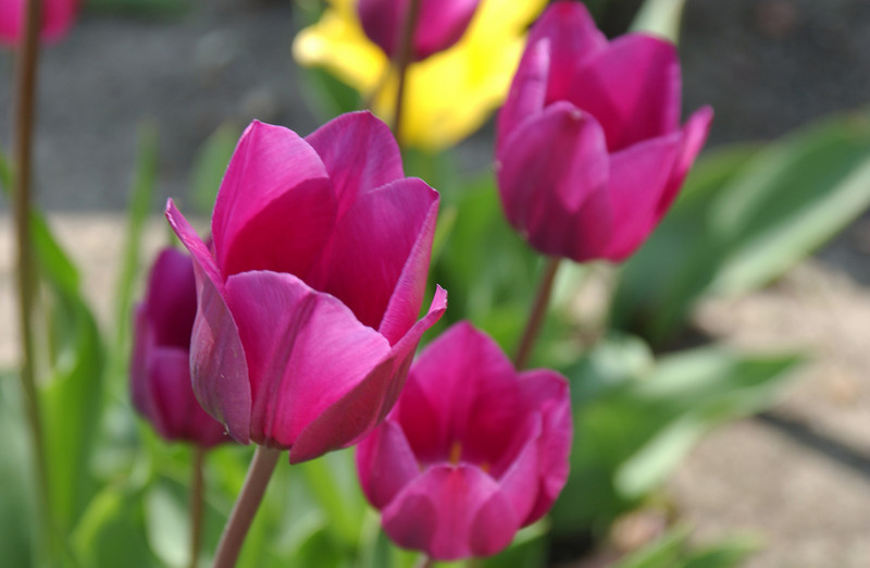 clip-015-flower-wdsm-03may03-0006.jpg