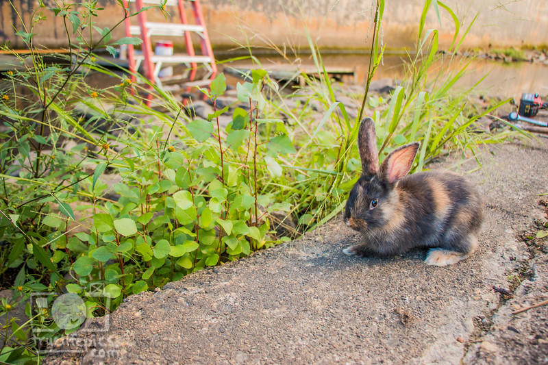 September 11, 2016 Mouse out supervising (8).jpg