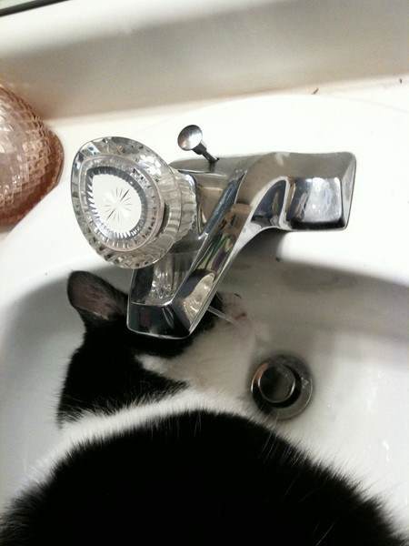 Kitties drink from the sink!