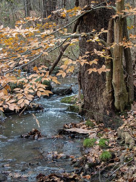 stream 112518.jpg