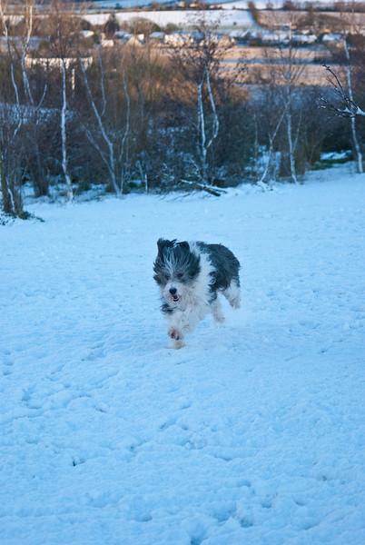 Snow Dog-0008