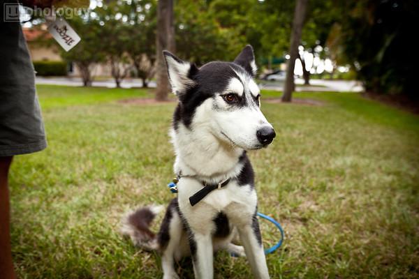 0012-South Florida Siberian Husky Rescue-Edit