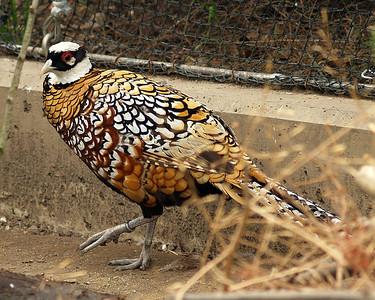 Spring - Summer Birds 2007