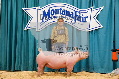 Pig Sale Pictures