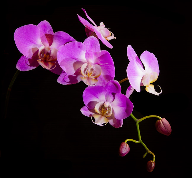 orchid 2020 (1 of 2).jpg