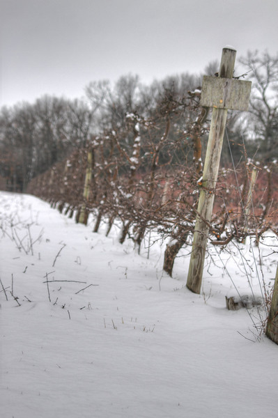 Easy Pickins Winter 020-1676784282-O.jpg