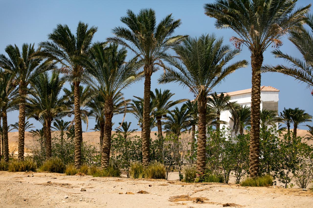 Egipt; Krajobraz; PrzezOknoAutobusu; Safari; pustynia; Palmy przy resorcie turystycznym