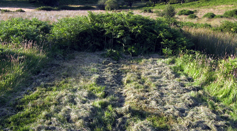 Where the mown path ends, there is bracken.