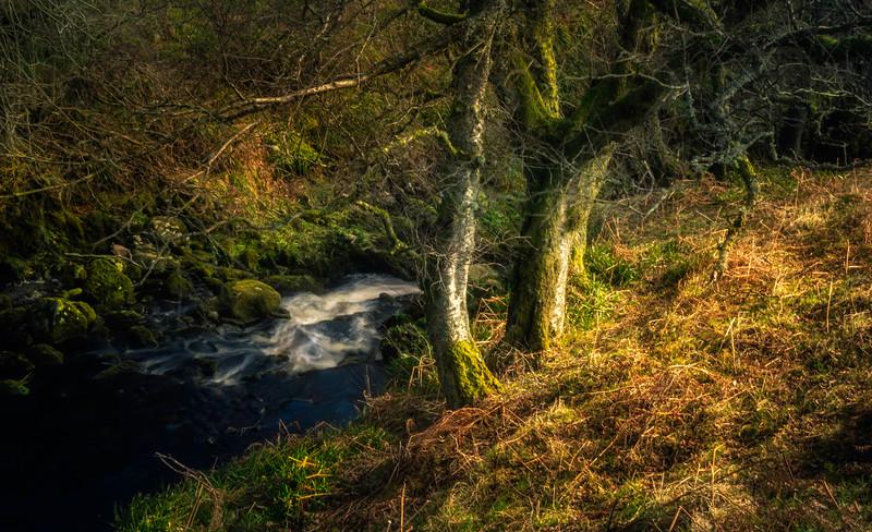Forest Shadows-112.jpg