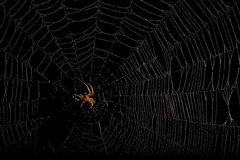 Spiderman-95.jpg