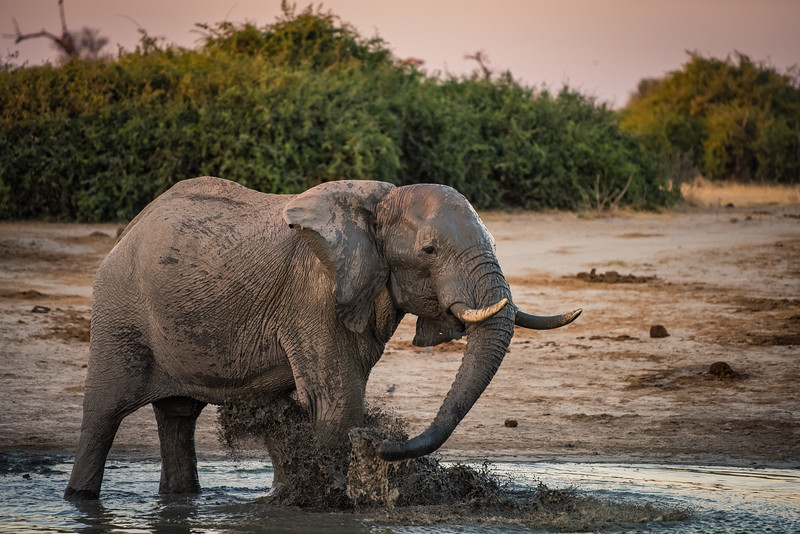 Botswana_June_2017 (4238 of 6179).jpg