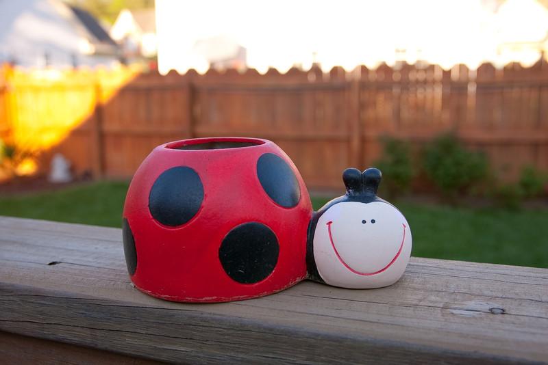 04/16/2012 - Found a big ladybug in Jay's yard.