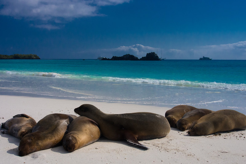 beach with sea lions 2.jpg
