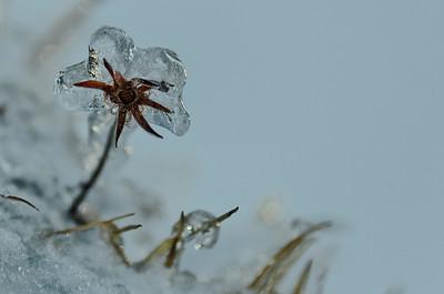 Pure Frozen