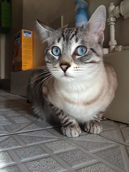 Lester El gato