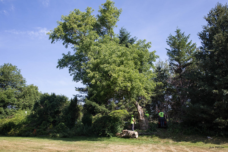 20180713_Trees_6423 PRINT 15X10.jpg