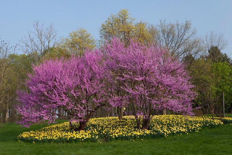 Spring12-1696-Edit copy.jpg