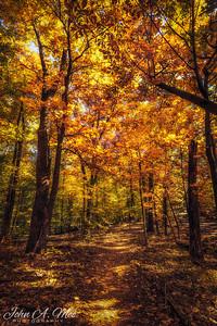 Fall Color in NoVA - Nov 2020