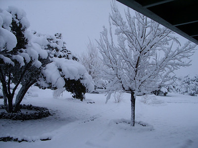 Jan '10 snowstorm, Show low, Az.