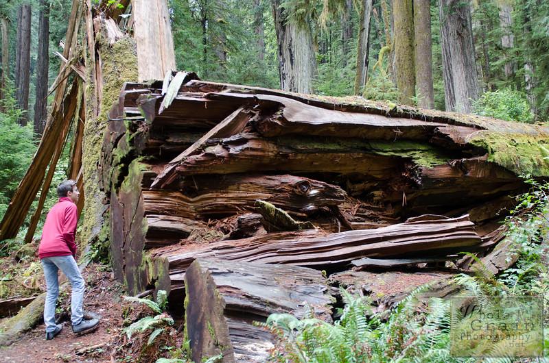20141015_Redwoods_0013.jpg